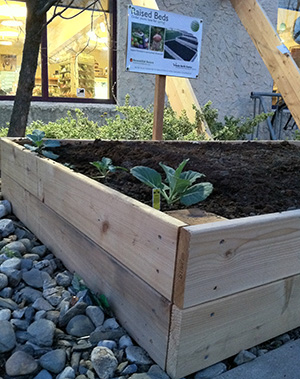 New collards in demo bed