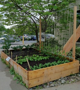 Garden bed with pea trellis