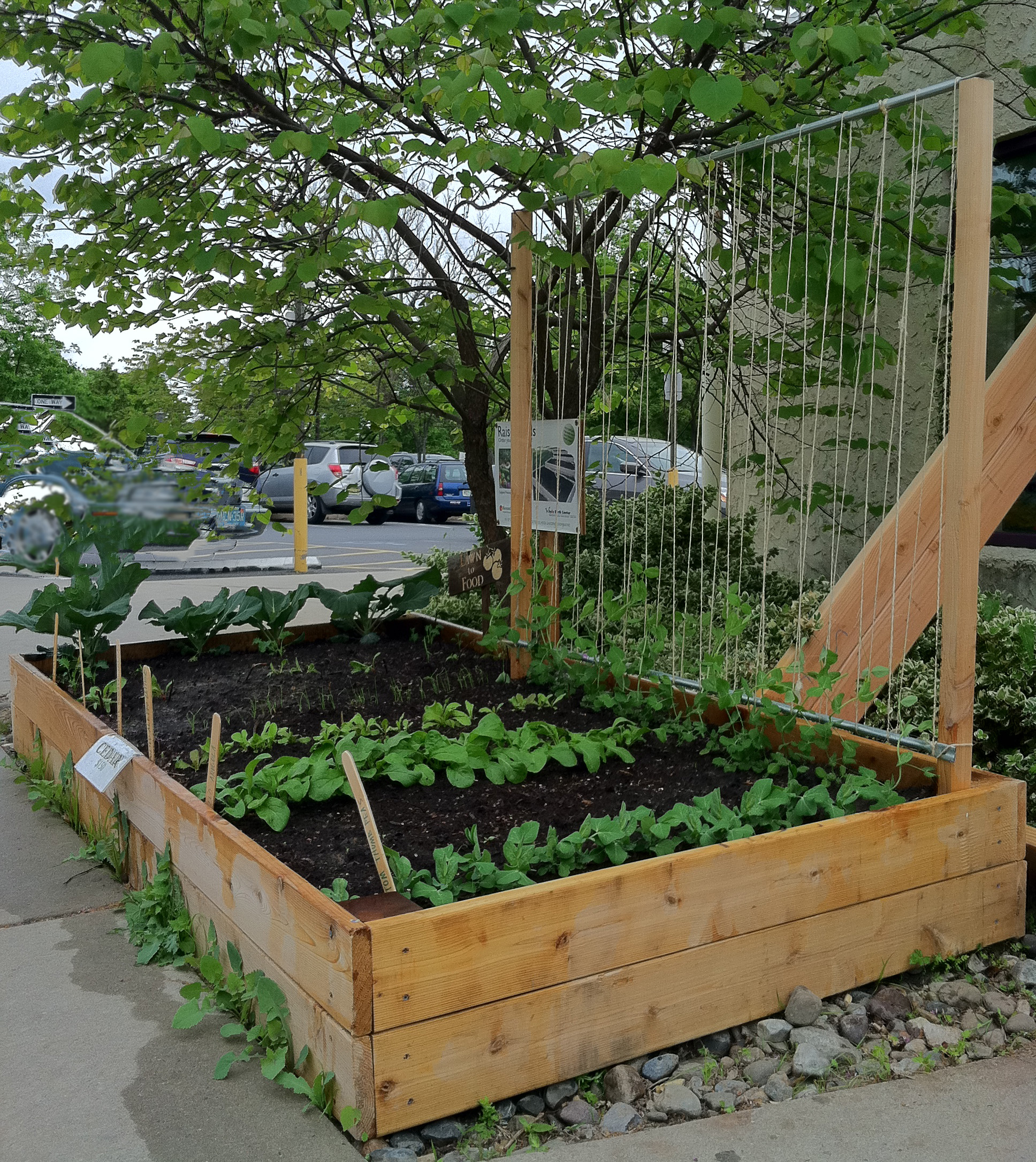 How to make a pea trellis bountiful boxes for Garden trellis designs