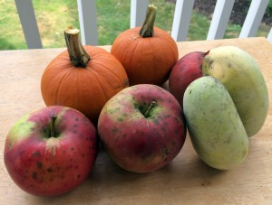 Apples, pumpkins and paw paws
